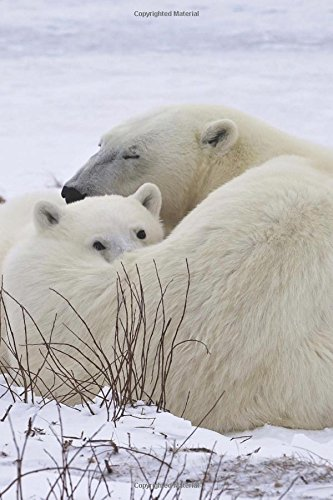 Baby Polar Bear Cub Resting on Mom Journal: 150 Page Lined ()
