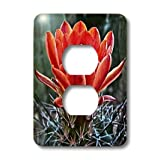 3dRose LLC lsp_32341_6 Decorative Colorful Garden Botanic Classic Plant Sw Southwest Desert Cactus Red Flower 2 Plug Outlet Cover