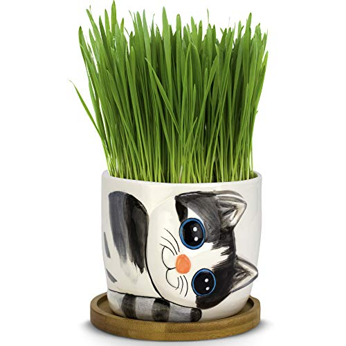 Window Garden - Cat Grass Growing Kit with Kitty Pot Planter (Sebby) - Purrfect Indoor Pet Wheatgrass Snack. Includes Soil and Organic Seed. Top Quality, Super Cute Gift, Christmas, Mothers Day