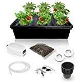 DWC Hydroponics Growing System Kit – 2 Large Airstone, 6 Plant Sites (holes) Bucket with Air Pump – Best Indoor Herb Garden for Lettuce, Mint – Complete Hydroponic Setup Grow Fast at Home by SavvyGrow For Sale