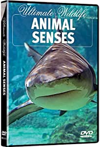 Ultimate Wildlife: Animal Senses