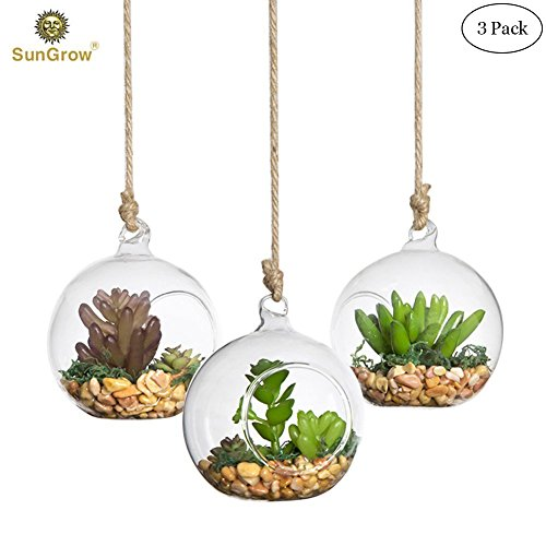 Flask Vase (3 Hanging Glass Terrariums by SunGrow - Beautiful Spherical Air Plant Orb - Handmade, heat-resistant glass - Create refreshing atmosphere in Terrace Garden)