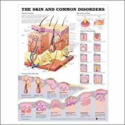 Skin and Common Disorders Anatomical Chart Unmounted