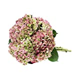Farm Fresh Natural Jumbo Antique Red Hydrangeas - Pack 12