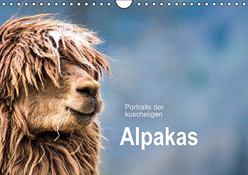 Portraits der kuscheligen Alpakas (Wandkalender 2016 DIN A4 quer): Ein Kalender mit stimmungsvollen Alpaka Portraits. (Monatskalender, 14 Seiten) (CALVENDO Tiere)