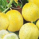 CUCUMBER - Lemon - 20 SEEDS [easy to grow]