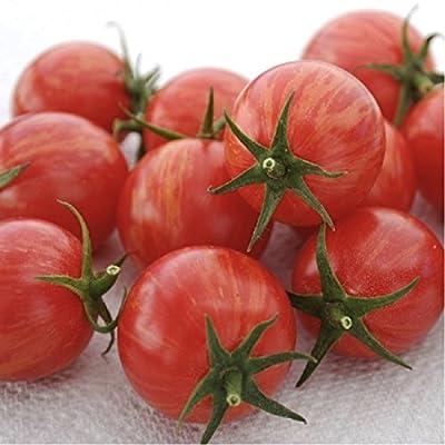 Organic Cherry Tomato 'Pink Bumble Bee' (Lycopersicon Esculentum Mill.) Indeterminate Heirloom Seeds, New Artisan : Garden & Outdoor