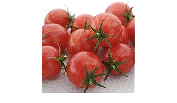 Pink Bumblebee Tomato Seeds New Organic Vegetable Heirloom Free Shipping USA