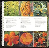 Garden Color Book