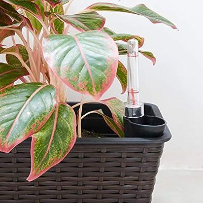 Vifah V1904 Yaddo 15 x 7 x 6 Rectangular Wicker Self-Watering Planter in Espresso : Garden & Outdoor