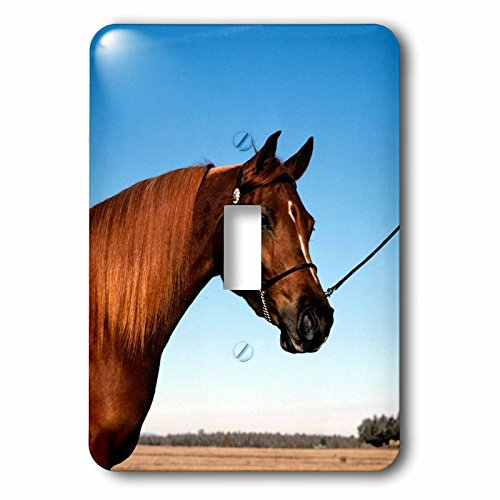 3dRose TDSwhite – Horse Equine Photos - Arabian Show Horse Pasture - Light Switch Covers - single toggle switch (lsp_285453_1) by 3dRose