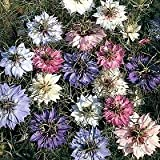 500 MIXED COLORS LOVE IN A MIST PERSIAN JEWELS (Fennel Flower) Nigella Damascena Flower Seeds