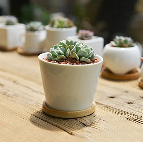 sun-e-modern-white-ceramic-succulent-planter-pots-mini-flower-plant-containers-with-bamboo-saucers-r