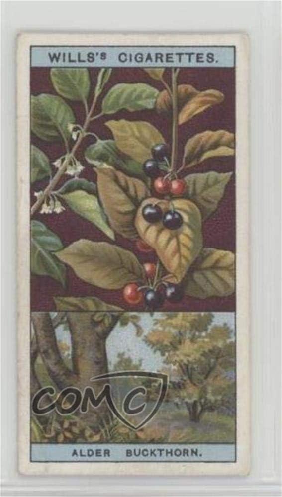 Alder Buckthorn Or Berry Bearing Alder Trading Card 1924 Wills