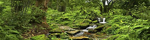 Reptile Habitat Background; Rain Forest with Stream, for 24x18x18 Terrarium, 3-sided Wraparound