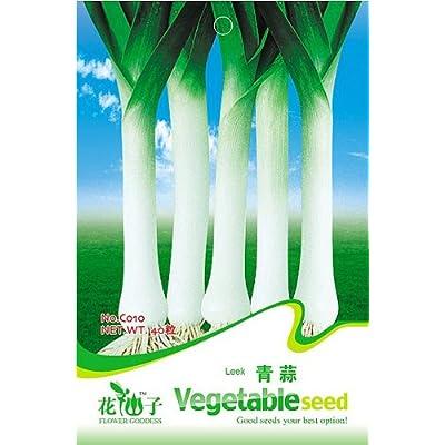 Business sasha Each Pack 50+ Seeds Healthy Organic Chinese Leek Oriental Garlic Flat Chive Allium (3) : Garden & Outdoor