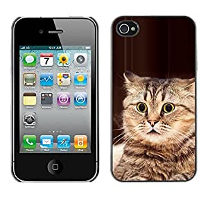 Playing Cat American Bobtail Manx Brown - Metal de aluminio y de plástico duro Caja del teléfono - Negro - Apple iPhone 4 / iPhone 4S / 4S