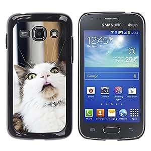 YiPhone /// Prima de resorte delgada de la cubierta del caso de Shell Armor - LOL Funny Cat - Samsung Galaxy Ace 3 GT-S7270 GT-S7275 GT-S7272