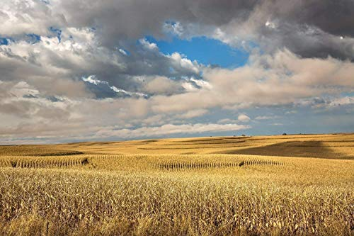 Iowa Landscape Photography Art Print - Picture of Terraced Corn Fields Under Dreamy Sky in Fall Rural Farm Decor Artwork for Home Decoration 5x7 to -