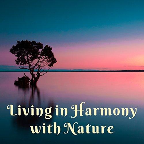 Amazon com: Night Meditation: Mothers Nature Music Academy: MP3