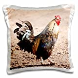 Danita Delimont - Farms - Farm, Ameraucana rooster with red comb - NA02 PWO0126 - PiperAnne Worcester - 16x16 inch Pillow Case (pc_140364_1)