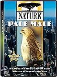 Nature - Pale Male