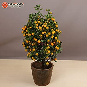 HOO PRODUCTS - 100pcs Edible Fruit Mandarin Indoor Bonsai Tree Seeds Citrus Bonsai Mandarin Orange Seeds Buy Bonsai Tree Brand New !