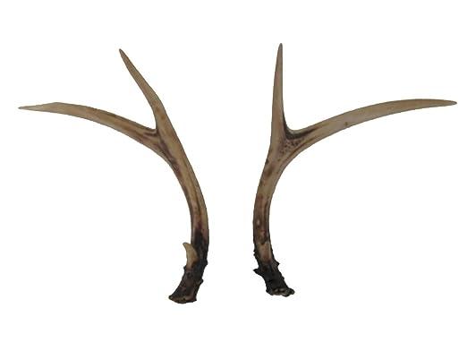 Pine Ridge Whitetail Deer Cuernos Set (2 Unidades) de Resina ...
