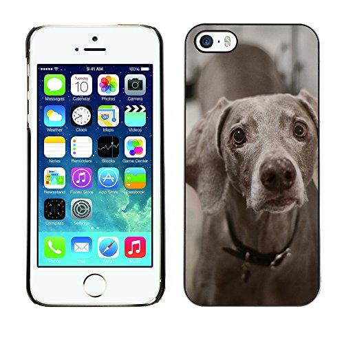 Premio Sottile Slim Cassa Custodia Case Cover Shell // F00009844 chien // Apple iPhone 5 5S 5G