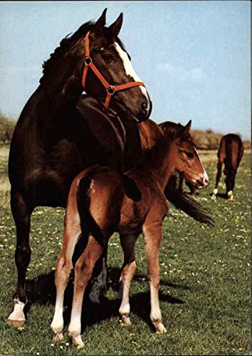 (Mare with foal from Groningen Horses Original Vintage)