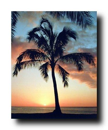 Diseno De Animales Marinos De Atardecer En La Playa Tropical