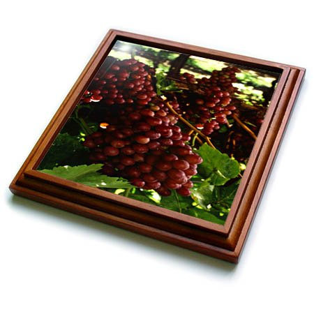 3dRose TDSwhite - Farm and Food - Food Flame Red Grapes Vineyard Healthy - 8x8 Trivet with 6x6 ceramic tile (trv_285138_1)