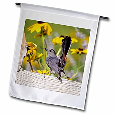 3dRose Danita Delimont - Catbird - Gray Catbird on wooden fence near Black-eyed Susans, IL - Flags