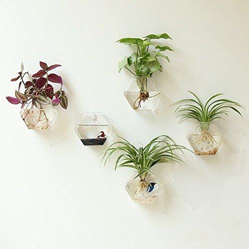 Mkono Hanging Plant Terrarium Planter Hexagon product image