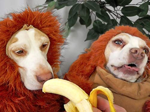 Disguise Wizardry 101: Cute Dogs Maymo & Penny]()