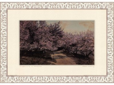 Poster Palooza Framed Disappearing Blossom- 24x18 Inches - Art Print (White Wash Frame)