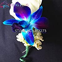 100pcs A Bag Dendrobium Seeds Potted Seed Rare Phalaenopsis Orchid Flower Plants Bonsai Greenhouse Growing The Budding Rate 99%