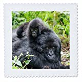 3dRose Danita Delimont - Baby animals - Africa, Rwanda, Volcanoes NP. Mother mountain gorilla with its young. - 18x18 inch quilt square (qs_276533_7)