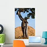 Wallmonkeys WM361244 Komodo Dragon Climbed a Tree Very Rare Picture Indonesia Komodo National Park an Excellent Illustration Wall Decal Peel and Stick Graphic (24 in H x 16 in W)