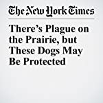 There's Plague on the Prairie, but These Dogs May Be Protected | Donald G. McNeil Jr.