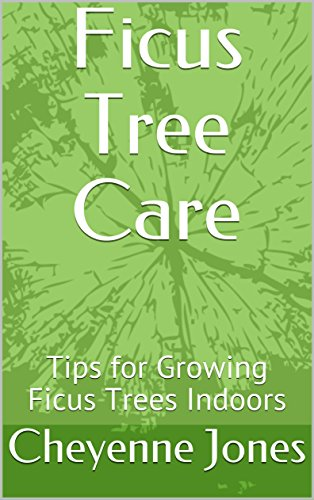 Ficus Tree Care: Tips for Growing  Ficus Trees Indoors
