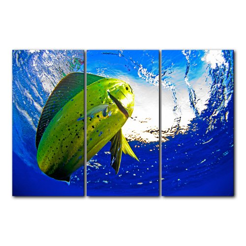 Doherty Photography 'Mahi' 3-pc Canvas Art Set by Ready2hangart