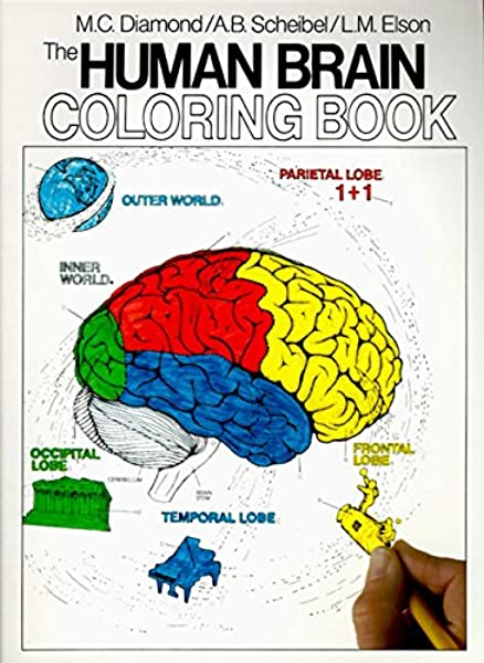 - The Human Brain Coloring Book (Coloring Concepts): Diamond, Marian C.,  Scheibel, Arnold B: 8583323156149: Amazon.com: Books