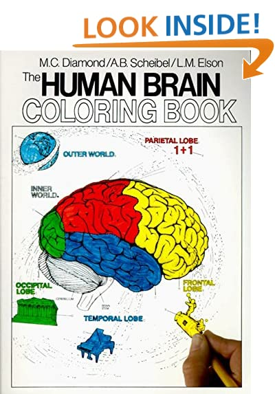 the human brain coloring book coloring concepts series - Science Coloring Book