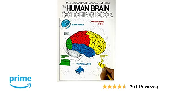 The Human Brain Coloring Book Concepts Series 8583323156149 Medicine Health Science Books Amazon
