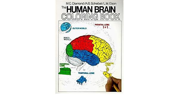 Human Brain Coloring Book: Diamond Books: Amazon.com.au: Books