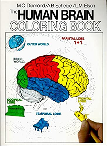Awesome Brain Anatomy Coloring Book Contemporary New Printable