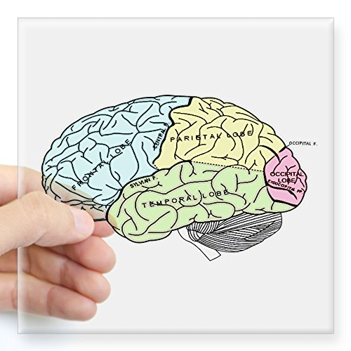 CafePress brain Sticker Square Bumper
