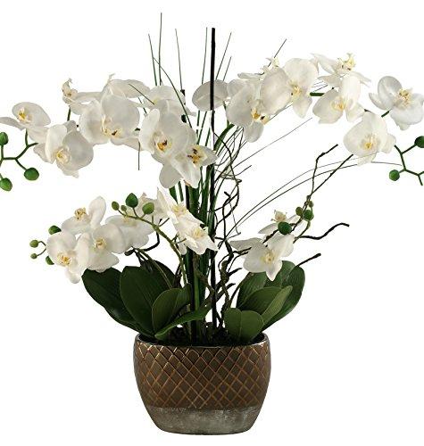 D & W Silks Orchids in Oval Ceramic Planter, Cream ()