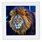 3dRose Sven Herkenrath Animal - Majestic Lion With a Determined Look Animal World - 18x18 inch quilt square (qs_280419_7)